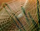 Tơ nhện có thể cứu người bị bỏng