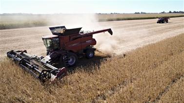 Nông dân Mỹ 'điếng người' vì Trung Quốc hủy mua nông sản
