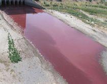 Tin đồn tận thế xuất hiện tại Mỹ vì hồ máu