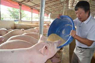 Chế phẩm sinh học và thảo dược là tương lai của chăn nuôi