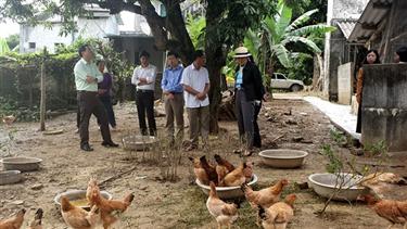 Khuyến khích chăn nuôi an toàn sinh học