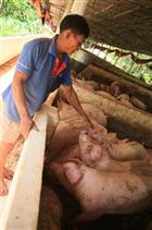 Chăn nuôi an toàn sinh học – Giải pháp phòng dịch hiệu quả