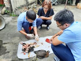 Nhận diện chủng virus cúm gia cầm độc lực cao tại Việt Nam