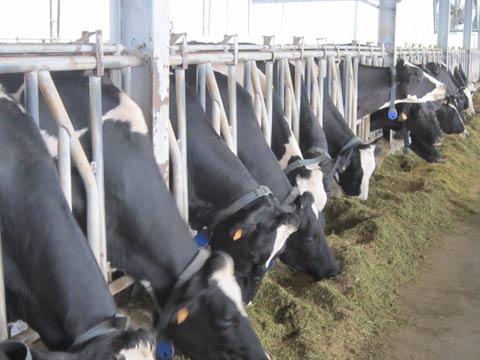 Vòng đời của sữa sạch