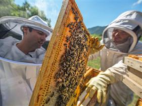 EU thay đổi quy tắc nhãn mác để đối phó mật ong giả Trung Quốc