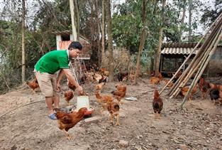 Thái Nguyên: Phát triển chăn nuôi gia cầm theo VietGAHP