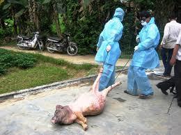 Công văn 1989/TY-DT Về việc khuyến cáo vắc xin phòng chống dịch lợn Tai xanh hiện nay.