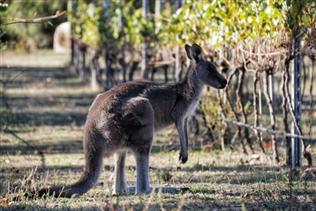 Australia phạt tù tội sát hại động vật