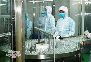 Sản xuất vacxin dịch tả lợn Châu Phi có những kết quả bước đầu khả quan
