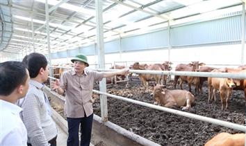 Bàn chiến lược ngành chăn nuôi đến năm 2030