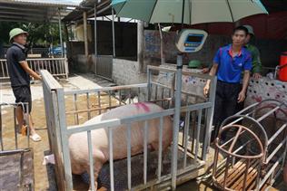 Giải bài toán ô nhiễm môi trường trong chăn nuôi