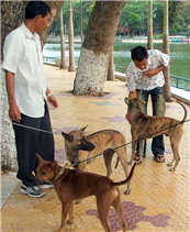 Quyết liệt phòng chống bệnh dại ở động vật