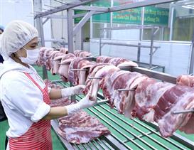 Phân biệt bệnh gạo lợn và áp xe bã đậu lành tính